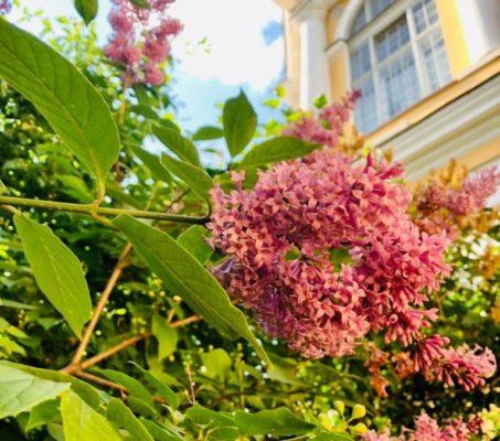 Церковный сад открыт ежедневно до 20.00